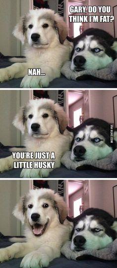 Pun puppy