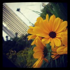 "@nemeanliogram's photo: ""ガーデンフィールズ。"""