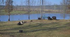 Big Oak Farms is an incredible 100 acre farm for horse and cattle in Lanett, Alabama with 20 acres of stocked lakes as well. For more information on Big Oak Farms please contact Nancy Kustermann at 706-957-3253 or email her at nancy.kustermann@harrynorman.com. Tune in tomorrow at 10:30 AM EST/ 9:30 AM CST on Fox WXTX to catch another episode of Great Homes in the Valley.