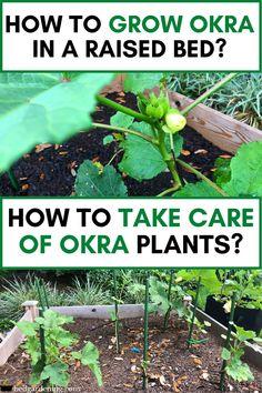 Veg Garden, Garden Boxes, Summer Garden, Garden Tips, Vegetable Gardening, Winter Garden, Container Gardening, Garden Ideas, Texas Gardening