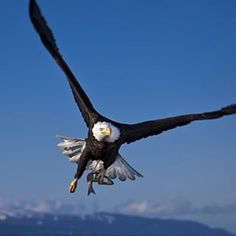 fly in the sky #freedom #like #flying #bluesky