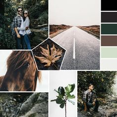 Fall Colors. Nature. Mood Board. Earthy. Adventure. Professional Business Branding by Designer Laine Napoli. Web Design, Logo, Mood Board, Brand Boards, and more.