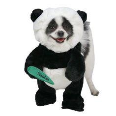 The Cutest Halloween Pet Costumes – 11 Pics
