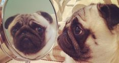 Mirror, mirror on the wall.. Who's the fairest of them all??