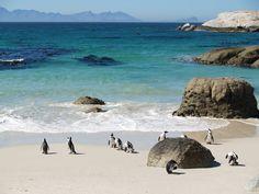 Pingouins sur la #plage de Simon's Town près du #Cap. #AfriqueDuSud