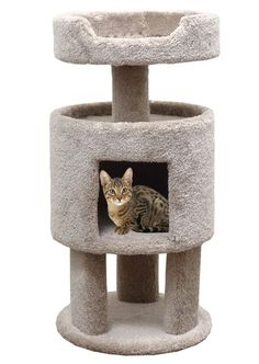Wood Carpeted Kitty Condo with Perch Cat Condo, Beige Carpet >>> To view further, visit now(This is an affiliate link and I receive a commission for the sales) : Cat Beds Furniture