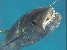 Spearfishing East Africa - YouTube