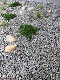 Outdoor Spaces, Outdoor Decor, Stepping Stones, Outdoor Gardens, Terrace, Parks, Landscaping, Flowers, Outdoor Living Spaces
