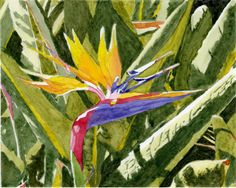 Bird of Paradise - 2013 8 x 10 inch watercolor on paper