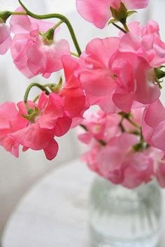 Dynamic Snap: Five Dynamic Flowers