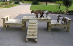 Dog Wooden Playground!
