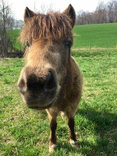 Just horsin' around! Mini Pony, Miniature Horses, Grow Together, Farm Life, Fields, Cow, Miniatures, Green, Animals