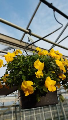 Hanging Baskets, Plants, Fall Hanging Baskets, Plant, Planting, Planets