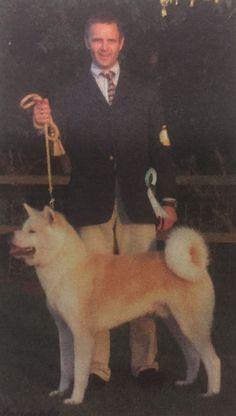 #Akita Inu group history by Simon Parsons #dogs #dogshows #dogshowing #AkitaInu