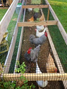 Garden chicken run