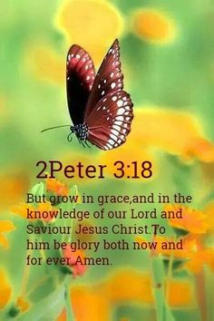 2 Peter But grow in grace, and in the knowledge of our Lord and Saviour Jesus Christ. To him be glory both now and for ever. Biblical Quotes, Religious Quotes, Bible Verses Quotes, Bible Scriptures, Faith Bible, Christian Life, Christian Quotes, Grow In Grace, God's Grace
