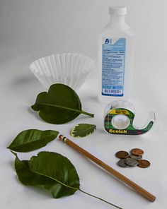 Slideshow: 10 Plant Experiments for Kids