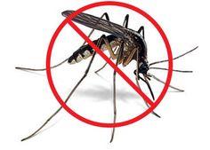 Homestead Annie: Big T's Natural Mosquito Killer