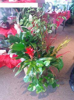 Big plant Arrangement