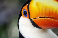 love the vibrant colors of the toucan