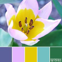 Inspired Trends & Color - Color Palettes Inspired by Nature - PatternPod.com