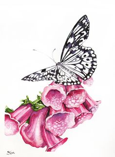 ARTFINDER: Butterfly-Original watercolors painting by Karolina Kijak -  Original watercolors of Butterfly Paper 300g  100% cotton, high quality pigments size 23x31cm  Follow me on facebook: https://www.facebook.com/kijakwate...