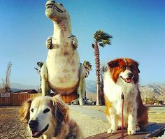 Visit The World's Biggest Dinosaur Museum while in Cabazon, CA with Fido.