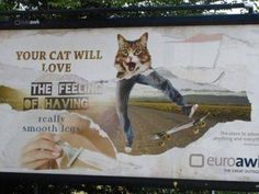 Your cat will love the feeling of two too