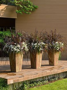 Graceful Grasses® Vertigo® – Purple Fountain Grass – Pennisetum purpureum Graceful Grasses® Vertigo® – Purple Fountain Grass – Pennisetum purpureum,Garten Graceful Grasses Vertigo is an annual plant that gives you a lot of 'bang. Outdoor Flowers, Outdoor Planters, Planters For Front Porch, Front Porch Flowers, Tall Planters, Potted Trees Patio, Deck Railing Planters, Porch Plants, Front Porches