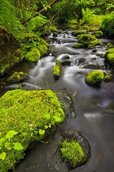 Wilderness Creek Northern Vancouver Island | Photo, Information