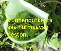 Raw Food Recipes, Vegetarian Recipes, Just Eat It, Sweet And Salty, Fodmap, Superfood, Food Inspiration, Pesto, Herbalism