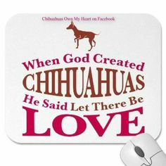 Chihuahuas....