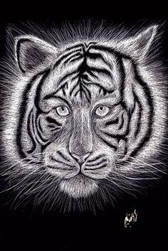 illustration_grattage_scratchboard_black and white_feline_tiger