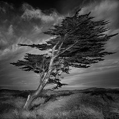 The Moorland of Wuthering Heights