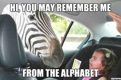 Funny Animal Memes   funny animal memes, animal pictures with captions, lolcats