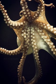 tentacles by GirlAi, via Flickr