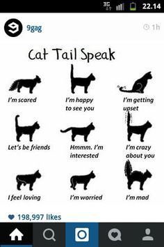Quote of the day - French proverb - Cats/Katzen/Chats/Gatos - Chat Cool Cats, I Love Cats, Crazy Cat Lady, Crazy Cats, Gatos Cool, Cat Behavior, All About Cats, Facts About Cats, Cat Facts