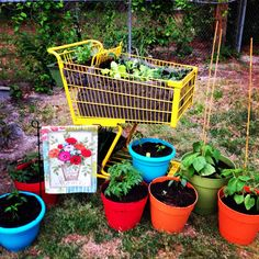 Shopping cart garden. Easy urban gardening