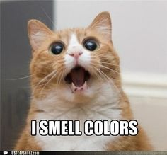 A cat that can smell colors