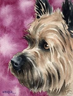 Cairn Terrier by D J Rogers