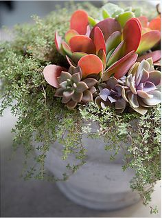 Fall Succulents and thyme...beautiful site for gardening and home