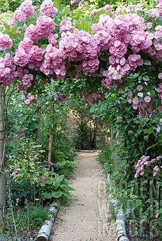 Climbing roses on garden arbor -birch logs on ground Garden Arbor, Garden Gates, Garden Landscaping, Garden Entrance, Garden Bed, Beautiful Gardens, Beautiful Flowers, Rare Flowers, Jardin Decor