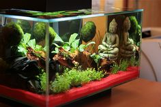 Cool Aquarium Set-up. #fluval