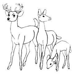 family deer coloring pages