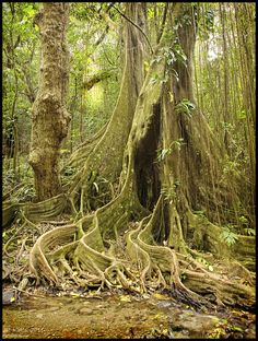 From the rain forests of St Kitts http://recalibration.weebly.com/uploads/3/0/9/8/3098614/5451246_orig.jpg