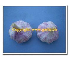 Normal White Garlic is also named Red Garlic, Purple Garlic. Find Chinese Normal White Garlic At Fenduni Foodstuff. Purple Garlic, Chinese Garlic, News China, Fresh Garlic, Vietnam, Pure Products