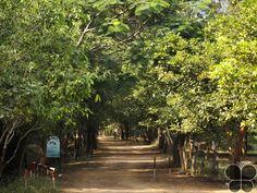 Kambalakonda Wildlife Sanctuary  http://www.hikeezee.com/explore/destinations/kambalakonda-wildlife-sanctuary-3041    #wildlifesanctuary #andhrapradesh