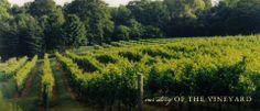 Chamard Vineyards | Good Wine is Made in the Vineyard