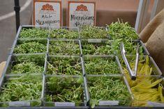 farm startup | Ever Consider Starting a Microgreen Farm?