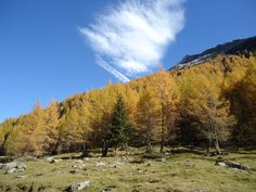 """""""Herbstwald """" wöchentliche Wanderungen mit Annelies Stocker"""